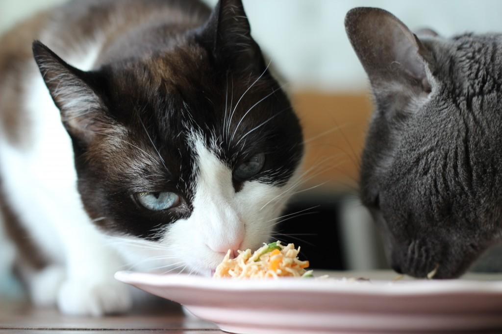 Aliments pour animaux familiers en France